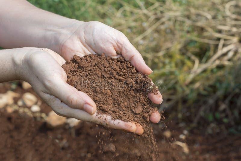 妇女有土壤的` s手 免版税库存图片