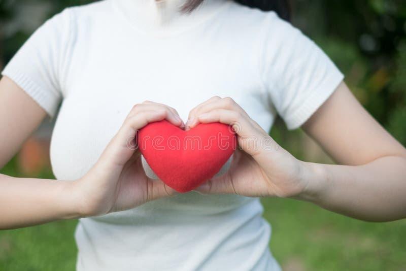 妇女有美好的准确修指甲的` s手小心地保留红色心脏 免版税库存图片