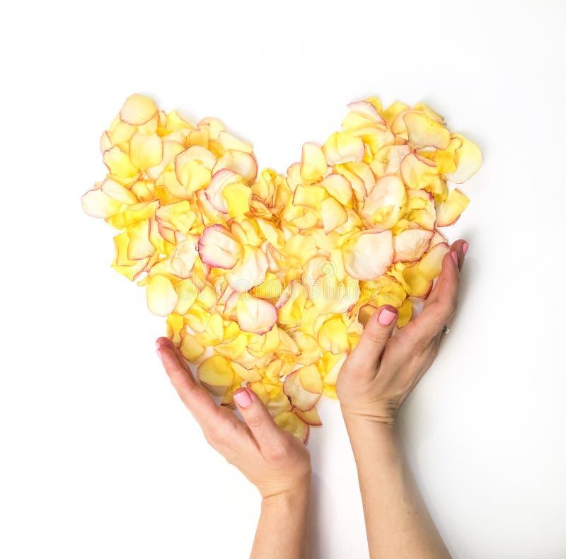 妇女有黄色心脏的` s手从瓣上升了 免版税库存图片