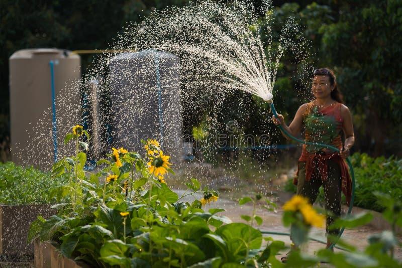 妇女浪花水家庭菜园 图库摄影