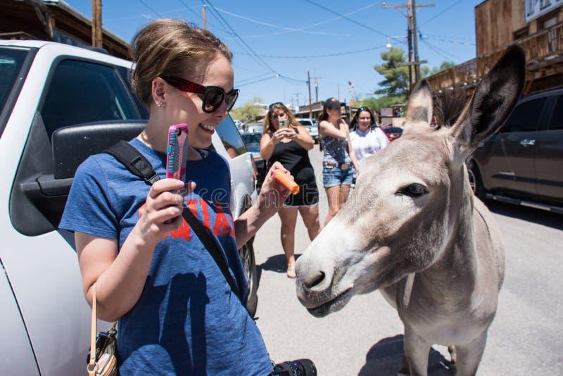 妇女游人喂养在Oatman亚利桑那街道上的一只野生驮货驴子沿路线66的, 免版税图库摄影