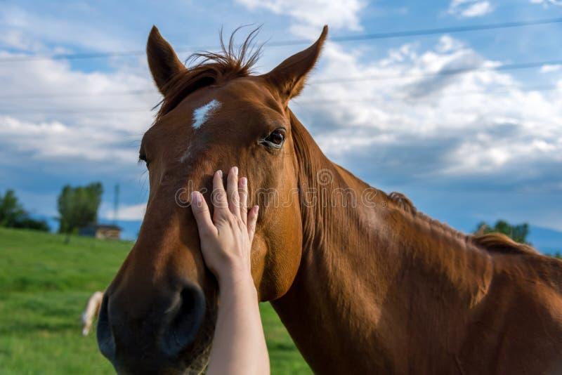 妇女的手抚摸马 免版税库存图片