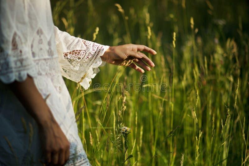 妇女的手接触高草 免版税图库摄影