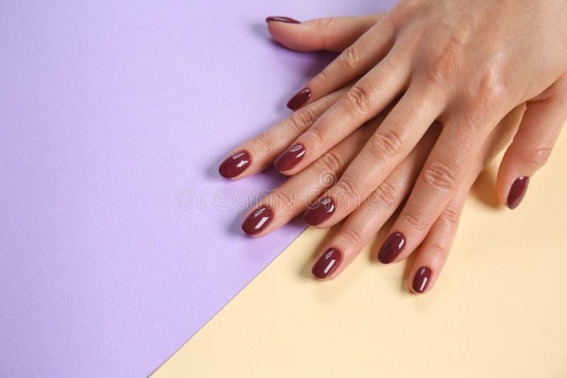 妇女的手有时髦的深红修指甲的在颜色背景 免版税库存图片