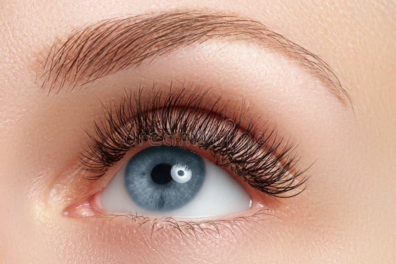 妇女的美丽的眼睛宏观射击与睫毛的 性感的看法,肉欲的神色 自然的构成 妇女的好漂亮的东西或人宏观射击  免版税图库摄影