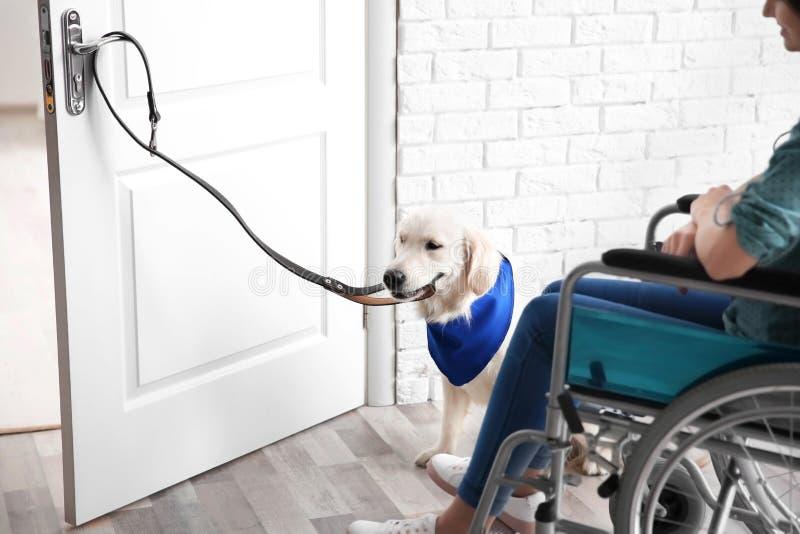 妇女的逗人喜爱的服务狗开门 免版税库存图片