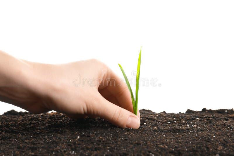 妇女种植绿色新芽的` s手 库存照片