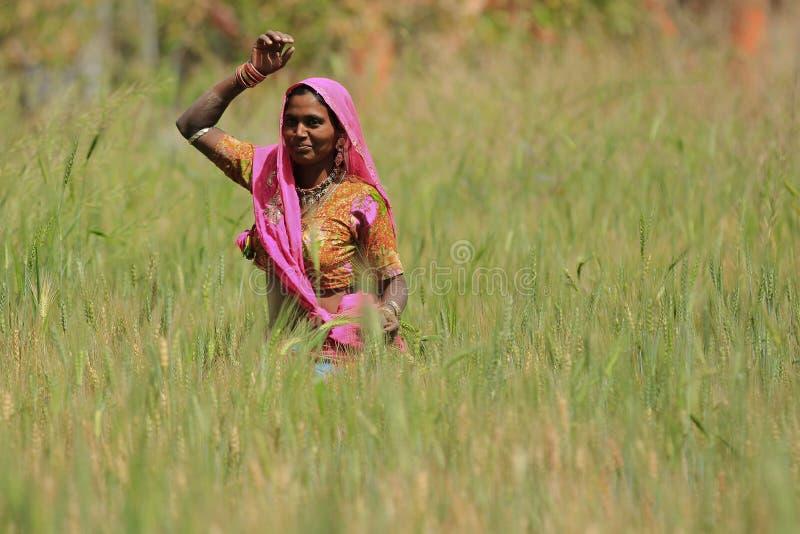 妇女种田 免版税库存图片