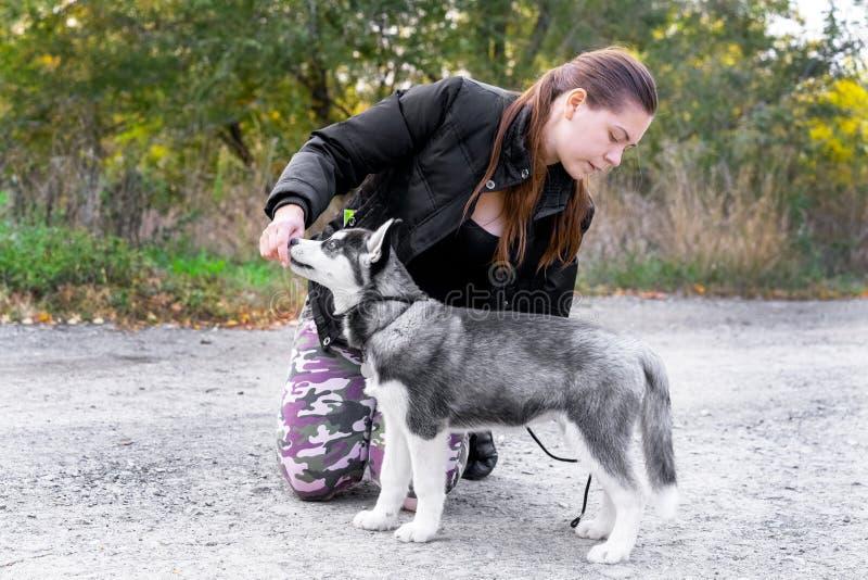 妇女给一个命令她的狗小狗西伯利亚爱斯基摩人在秋天公园 狗训练和守纪 库存图片