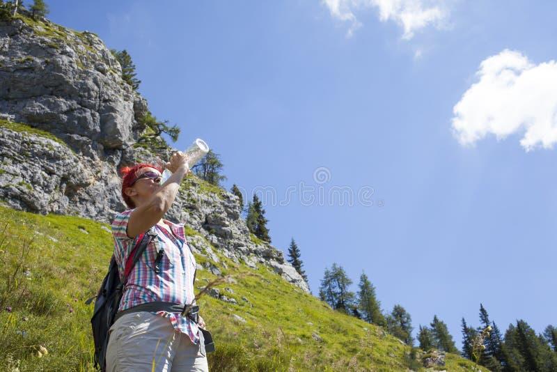 妇女老牛在山喝高 图库摄影