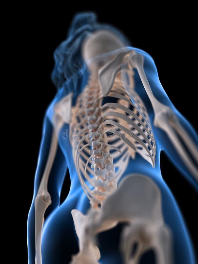 妇女脊椎 向量例证