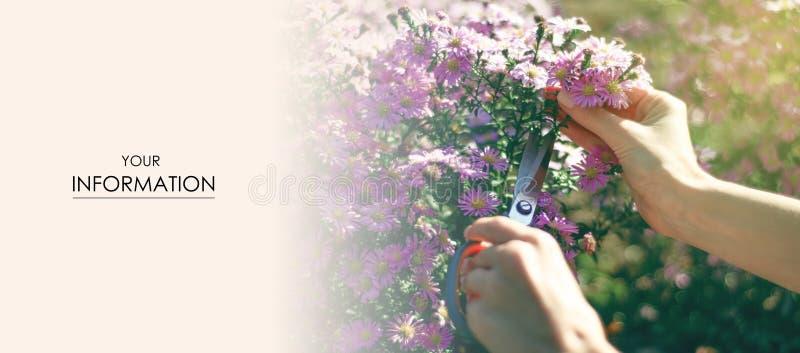 妇女花匠刻花植物从事园艺的剪刀样式 免版税库存照片