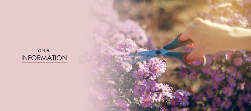 妇女花匠刻花植物从事园艺的剪刀样式 库存图片