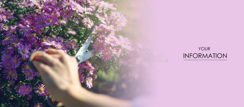 妇女花匠刻花植物从事园艺的剪刀样式 库存照片