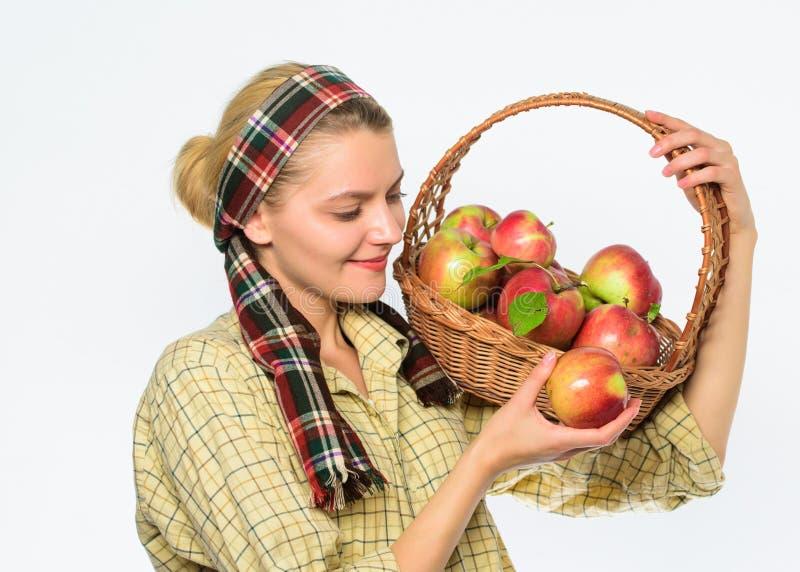 妇女花匠土气样式举行篮子用在白色背景的苹果 厨师食谱概念 妇女村民运载 免版税库存图片