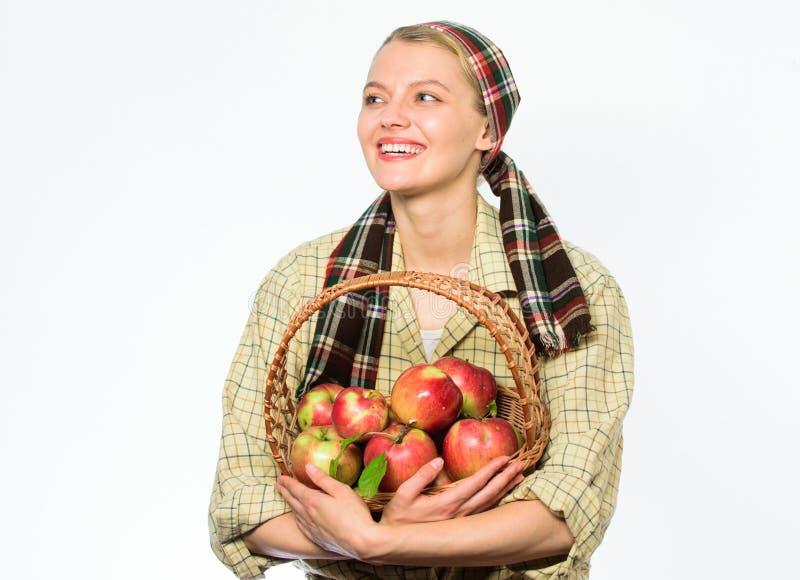 妇女花匠土气样式举行篮子用在白色背景的苹果 夫人农夫关于健康的维生素的花匠关心 库存照片