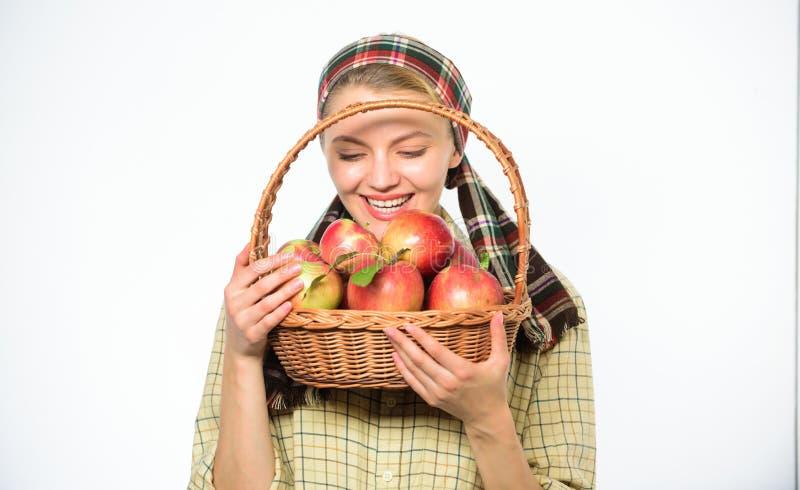 妇女花匠土气样式举行篮子用在白色背景的苹果 妇女快乐的村民运载篮子与 免版税库存照片