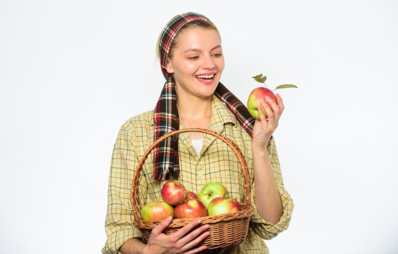 妇女花匠土气样式举行篮子用在白色背景的苹果 收割期概念 快乐的妇女 库存图片