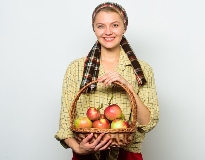 妇女花匠土气样式举行篮子用苹果在轻的背景收获 夫人农夫感到骄傲为她的收获苹果计算机 库存照片