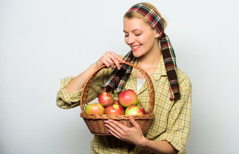 妇女花匠土气样式举行篮子用苹果在轻的背景收获 夫人农夫或花匠感到骄傲为她 免版税图库摄影
