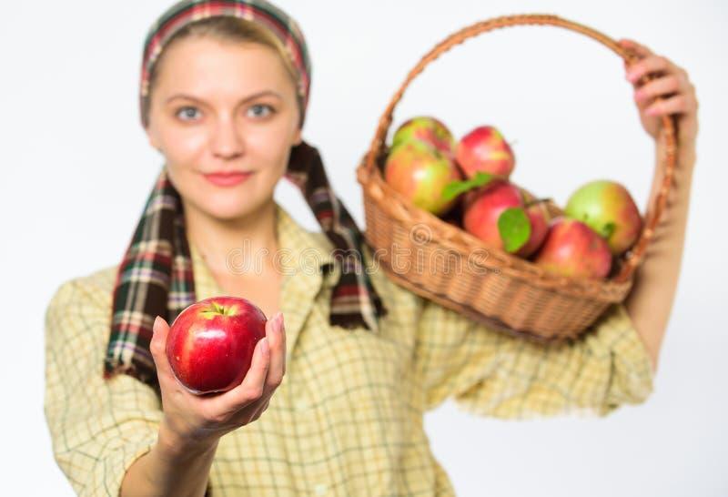 妇女花匠土气样式提议您在白色背景选择聚焦的苹果 夫人花匠感到骄傲为她的收获尝试 库存图片