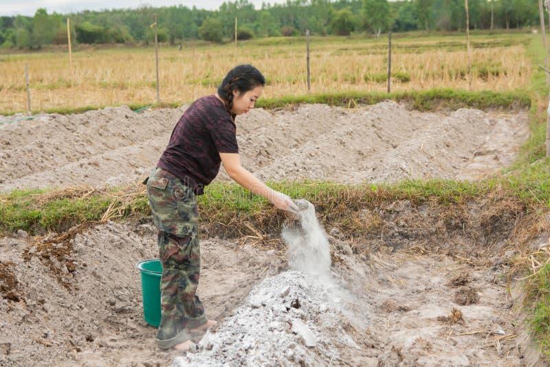 妇女花匠放石灰或氢氧化钙入土壤中立化土壤的酸度 免版税库存照片