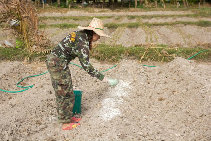 妇女花匠放石灰或氢氧化钙入土壤中立化土壤的酸度 图库摄影