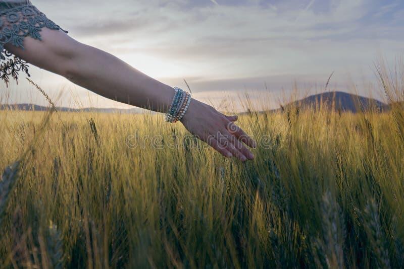 妇女草书通过在领域的麦子 免版税库存图片