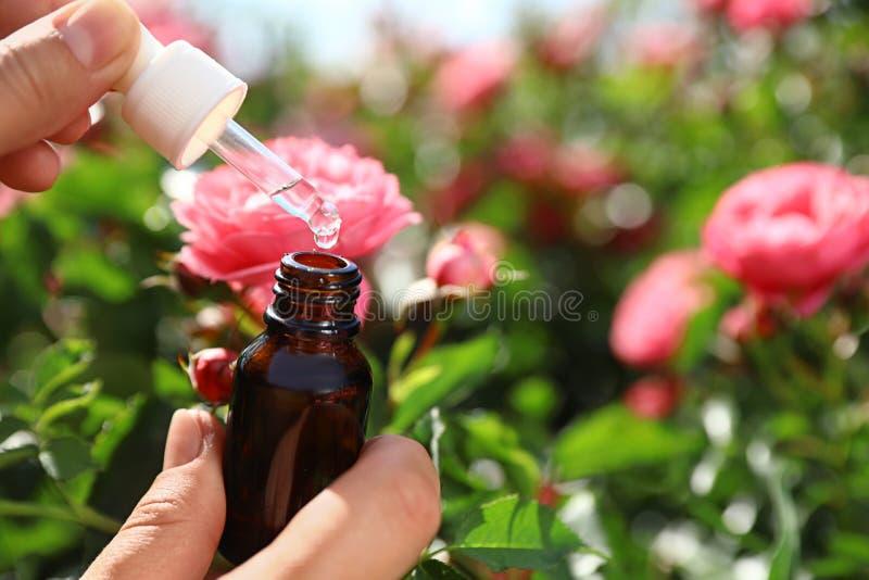 妇女藏品吸管和瓶在玫瑰丛附近的精油在庭院里 r 图库摄影
