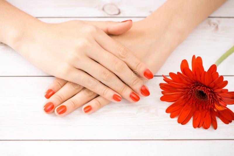 妇女递修指甲红色钉子 在花的重点 免版税库存照片
