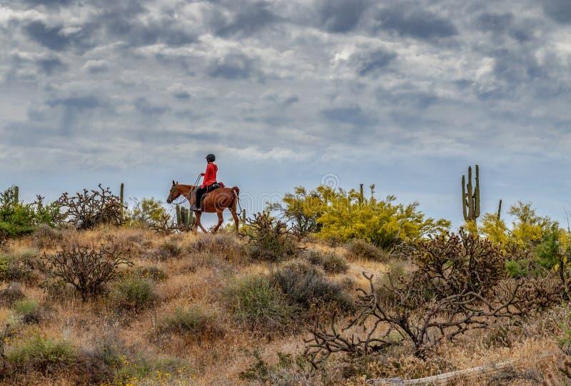 妇女骑乘马在亚利桑那沙漠 免版税库存照片