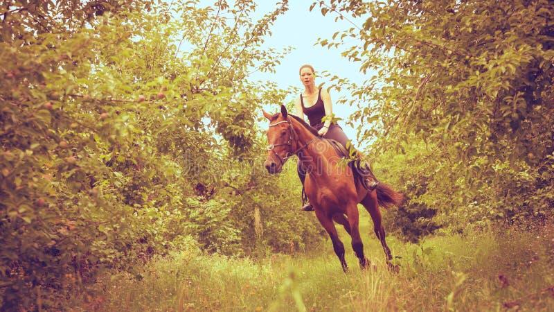 妇女骑师训练骑乘马 r 免版税库存图片