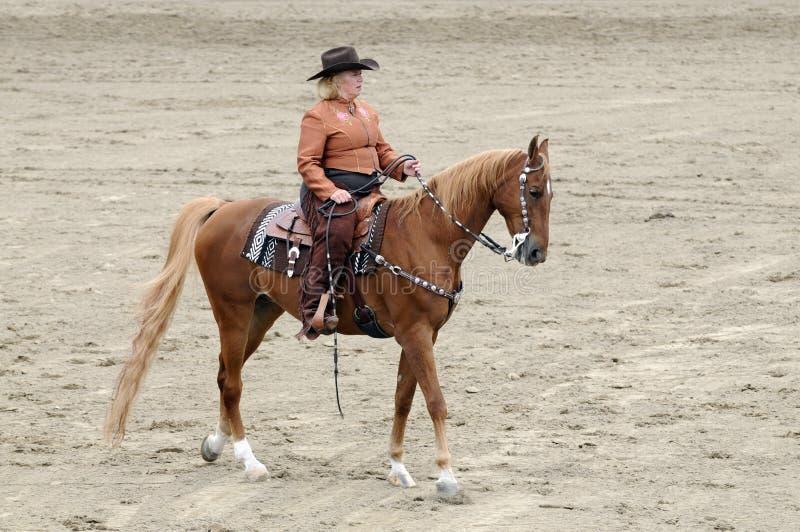 妇女骑马Saddlebred马 免版税库存图片