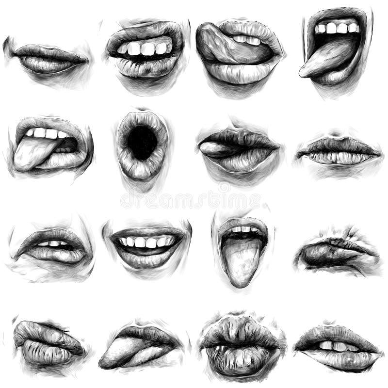 妇女` s嘴唇 向量例证