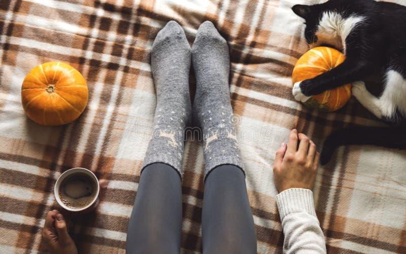 妇女` s手和脚在拿着杯子热的咖啡的毛线衣和羊毛舒适灰色袜子,坐格子花呢披肩有小猫的 免版税图库摄影