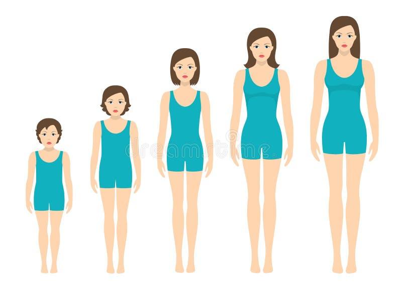 妇女` s身体成比例改变与年龄 女孩` s身体成长阶段 皇族释放例证