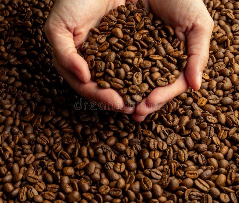 妇女` s递举行在大极少数的堆在咖啡背景的咖啡豆  库存图片