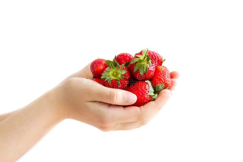 妇女` s递拿着大极少数成熟草莓 免版税图库摄影