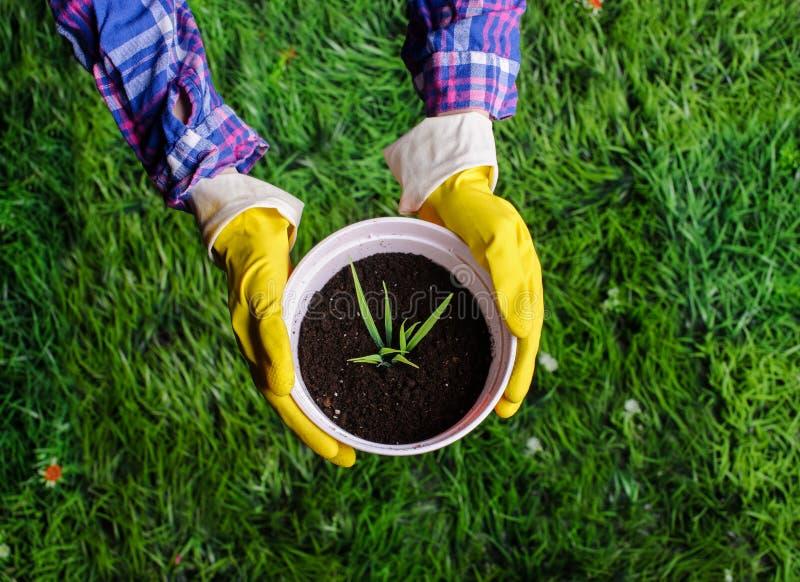 妇女` s递移植植物入一个新的罐 库存图片