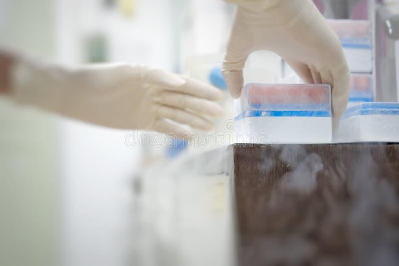 妇女reseacher与在管机架的Cryotube一起使用细胞培养存贮的保留在-80c对-150c在药物研究  免版税库存图片