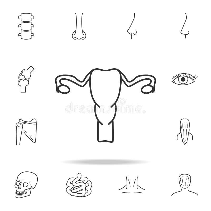 妇科学象子宫 详细的套人体零件象 优质质量图形设计 其中一个网的汇集象 向量例证