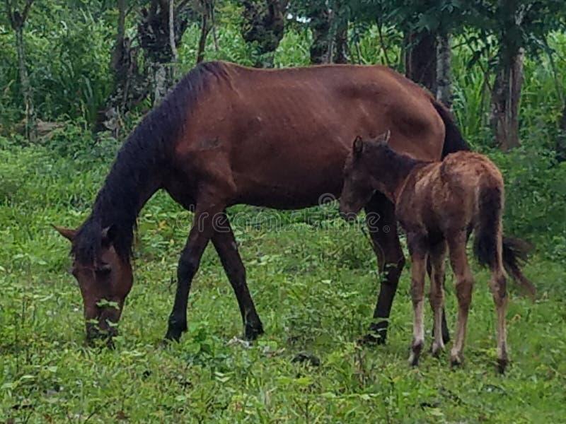妈妈和小马 免版税图库摄影