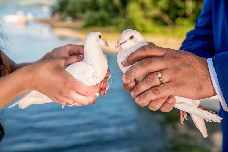 妻子和新娘拿着白色鸽子 免版税库存照片