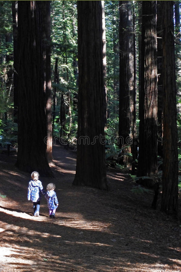 姐妹在巨型红木森林新西兰里旅行和远足 库存图片