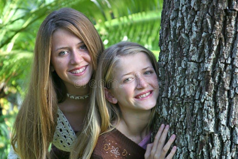 姐妹青少年的结构树 免版税库存图片