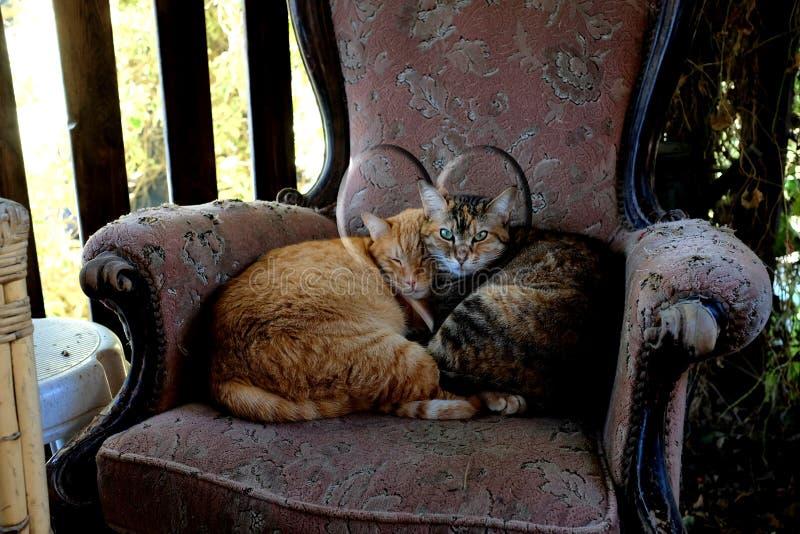姜猫和虎斑猫在一把老扶手椅子卷起了 免版税库存照片