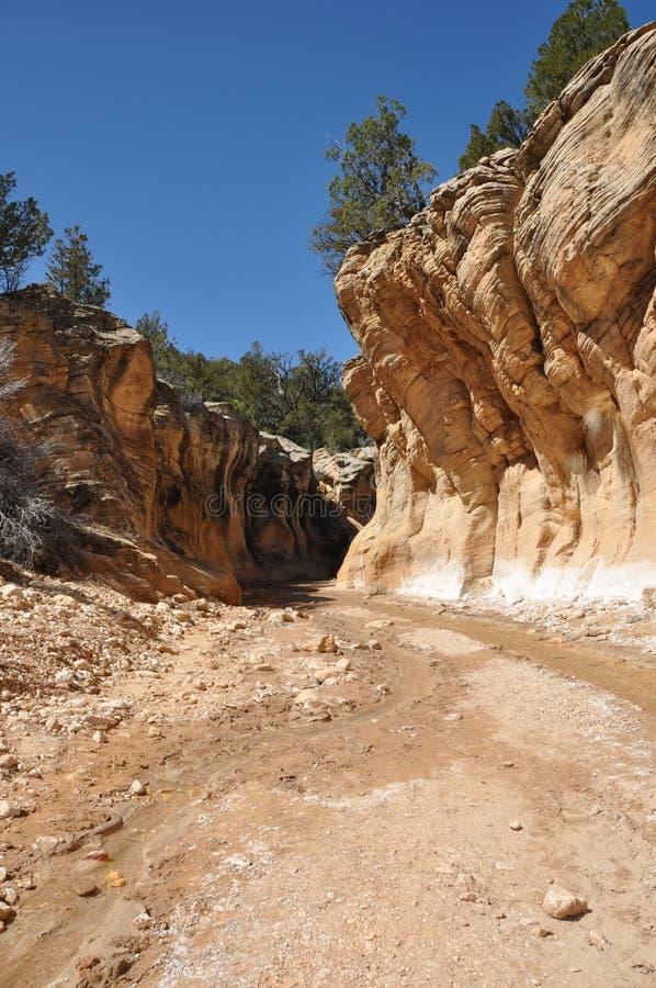 威利斯小河槽孔峡谷在埃斯卡兰蒂犹他 免版税库存照片