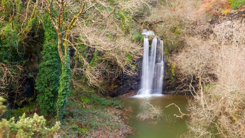 威尔士亲王猎物康沃尔郡 免版税图库摄影