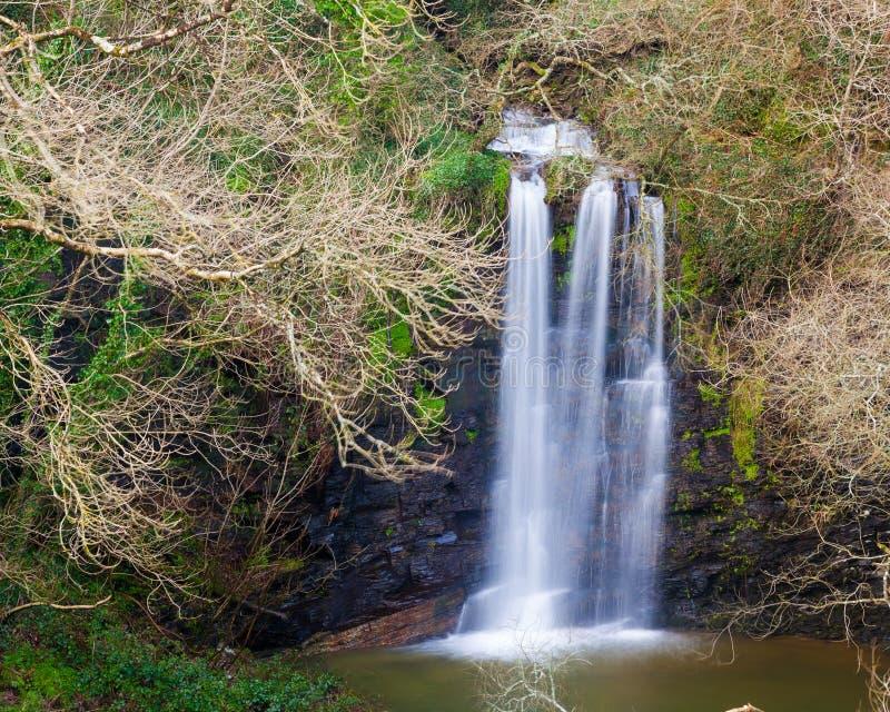 威尔士亲王猎物康沃尔郡 免版税库存照片