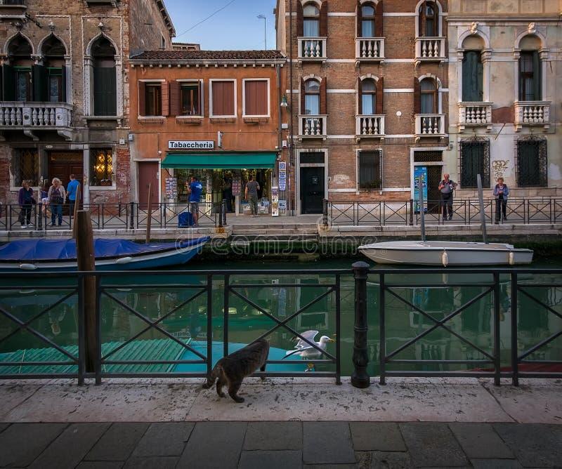 威尼斯桥梁和运河  意大利 库存照片